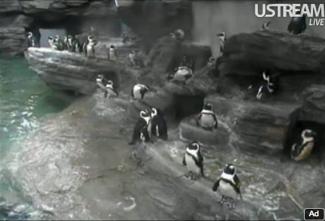 20120910-penguin.png