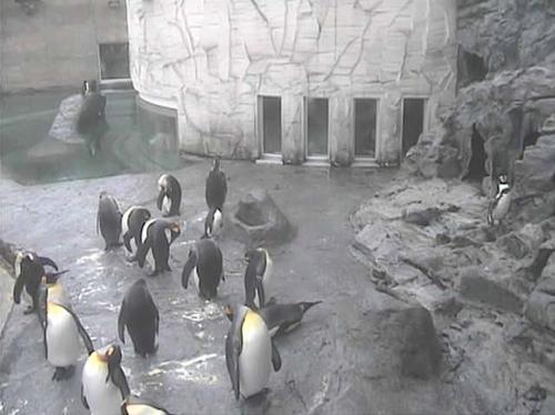 20120910-penguin3.png