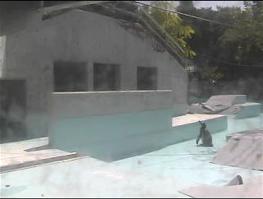 20120910-penguin6.png