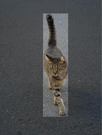 20121225 cat