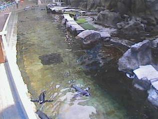 20120910-penguin4.png